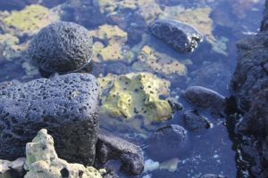 Coral and volcanic rock in a tide pool