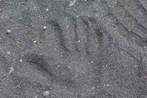 "Me saying ""Hello!"" on the black sand beach"